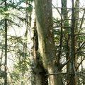 Mystères d'arbres 40