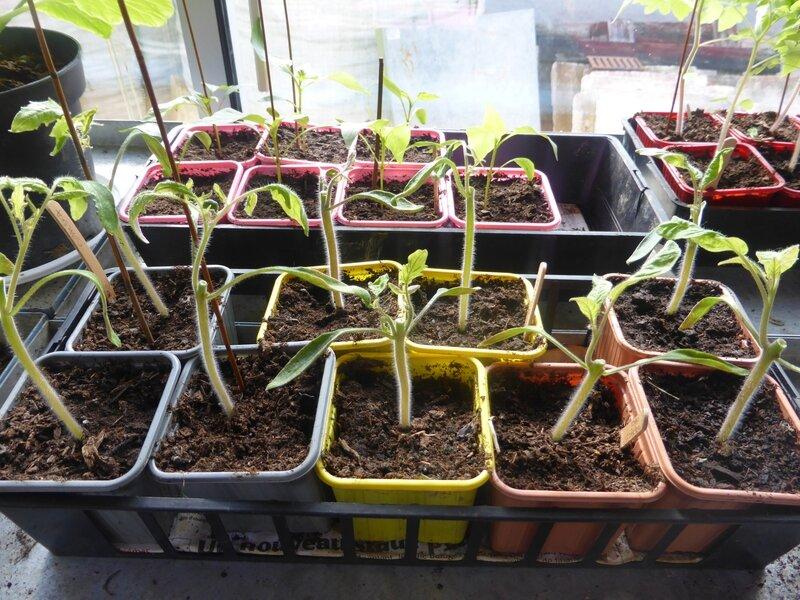 21-plants nursery (4)