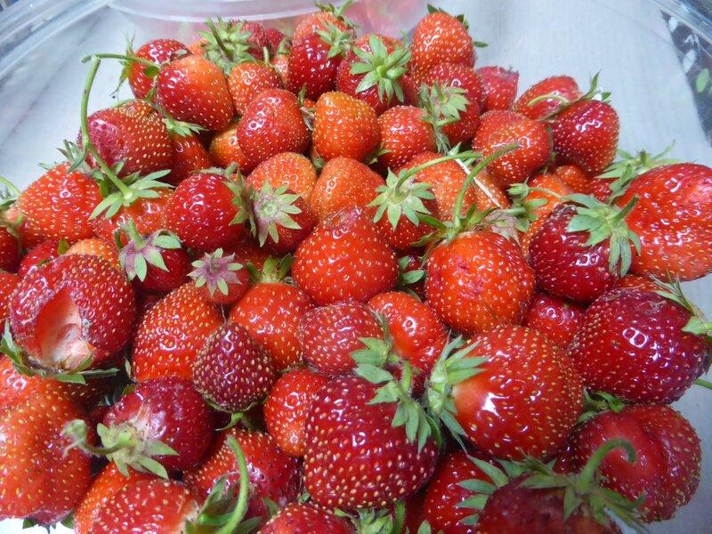 9-fraises (3)