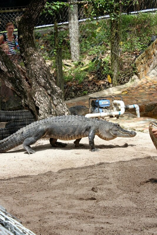 J24 - 21 juillet 2014 Everglades (173).JPG