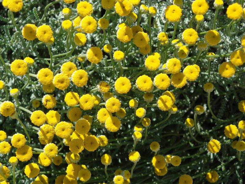 Des plantes grises qui sont si jolies le jardin de nat for Commandes fleurs