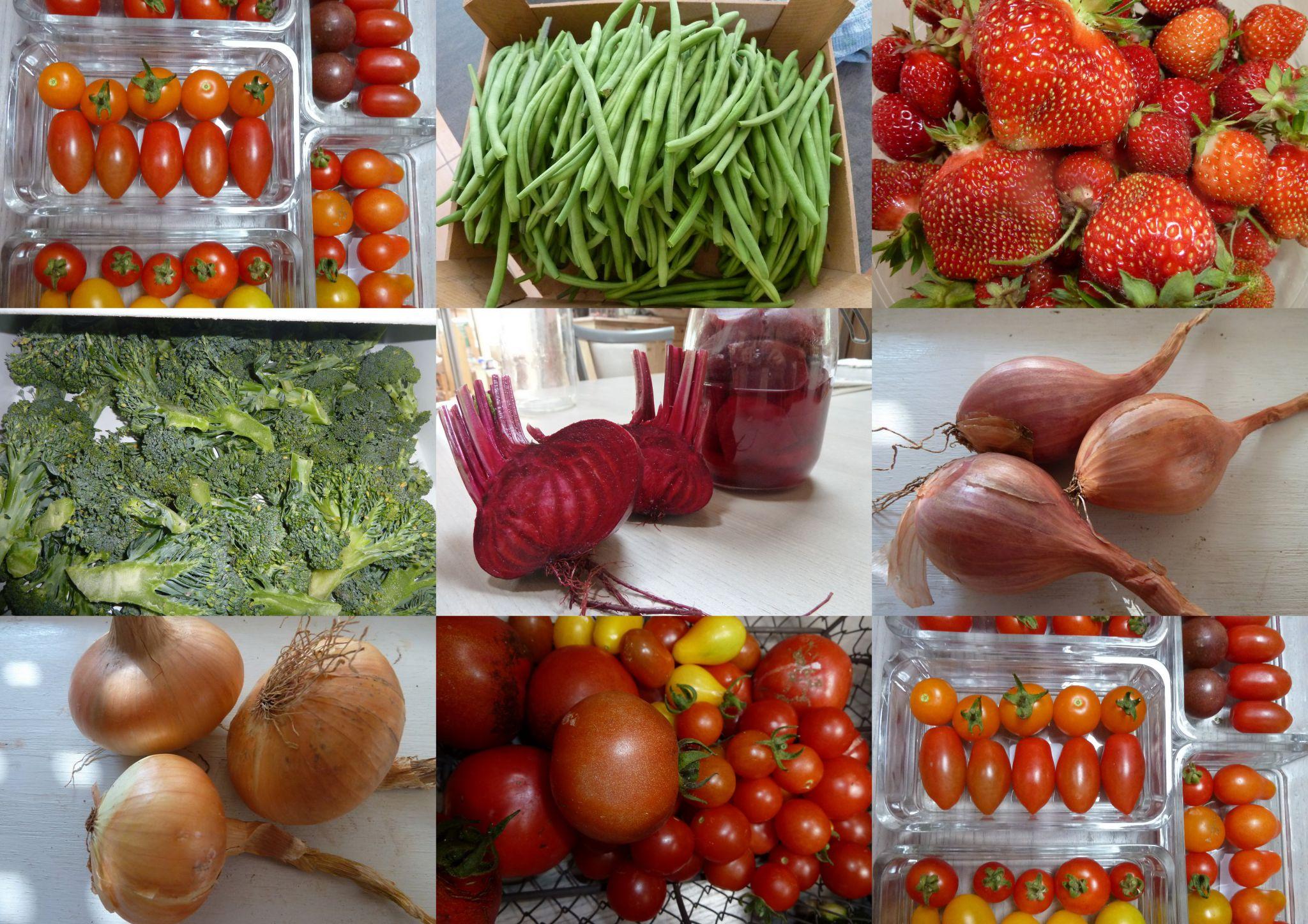 amap familiale - www.passionpotager.canalblog.com