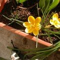 2009 fleurs de saisons
