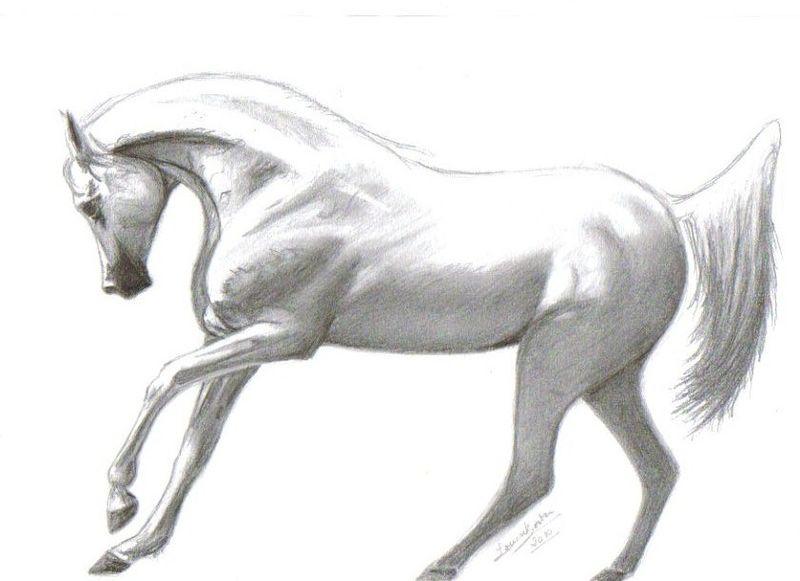 dessin cheval bien fait