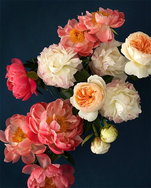 Flowers Photography by Kari Herer