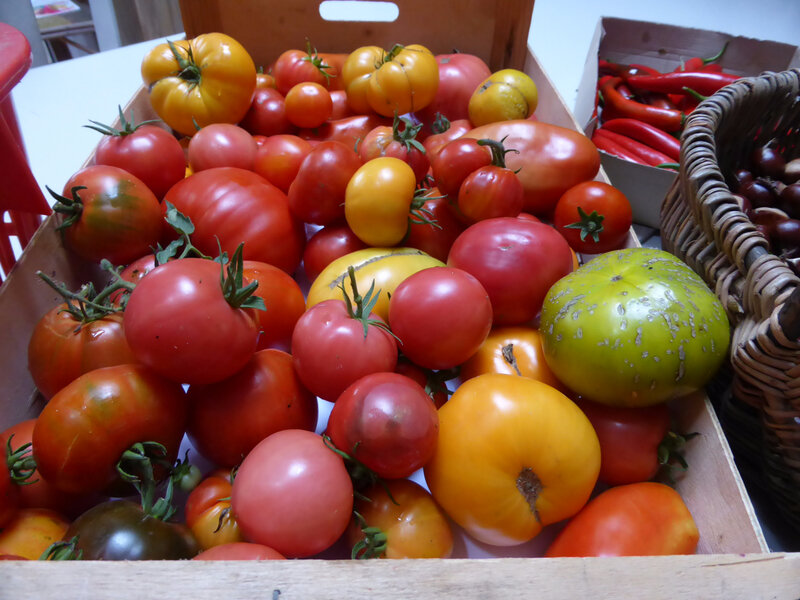 2-tomates, courgettes, aubergines (1)