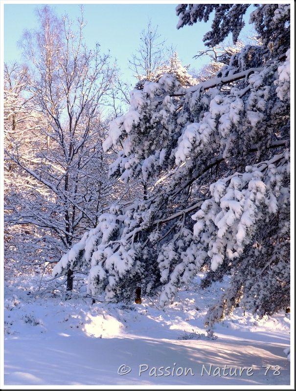 Balade dans la neige en forêt de Rambouillet