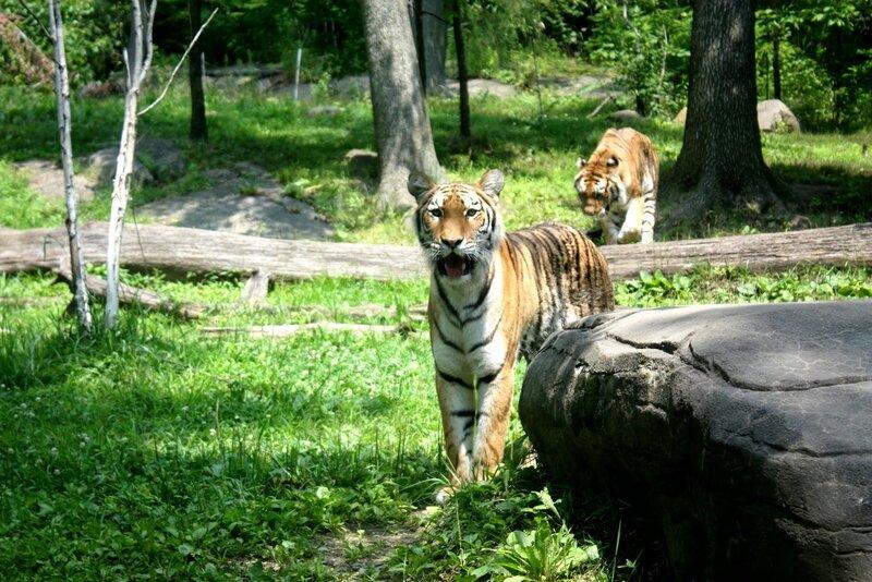 J11 - 08 juillet 2014 - zoo du Bronx (159).JPG