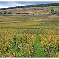 Couleurs d'automne Vignes12