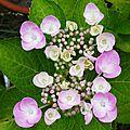 Fleurs de Leon 24061616