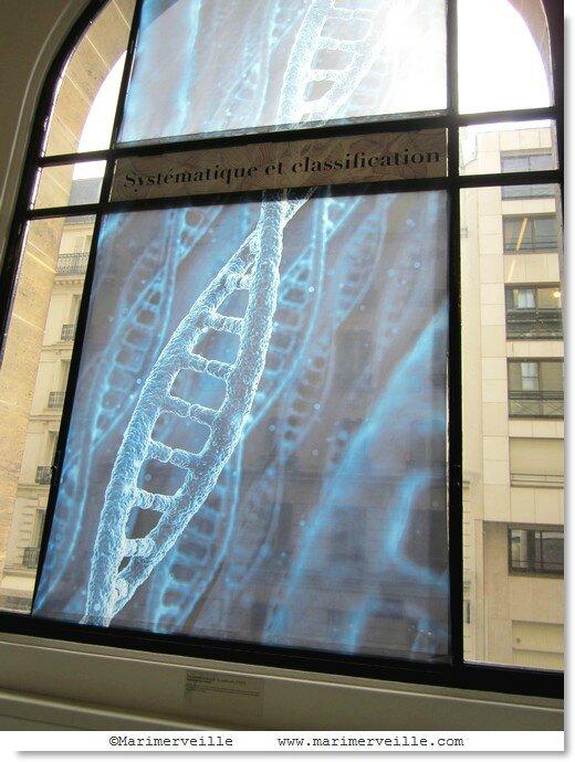 une histoire d'ADN - galerie botanique - Marimerveille