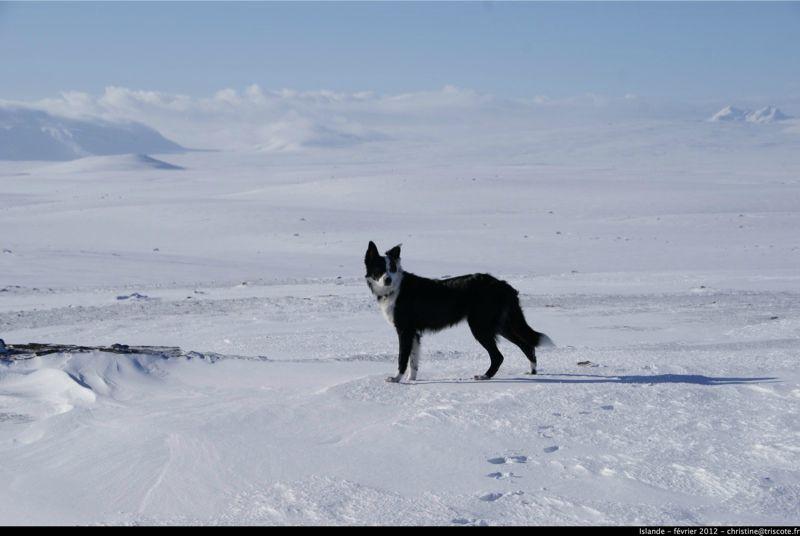 Islande_fev2012_380