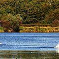Lac Cygnes 261015