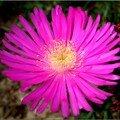 Une petite fleur