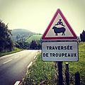 Sur la route, Pays Basque (64)