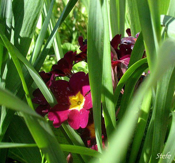 fleurs loigné (8)