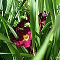 Fleurs de campagne,
