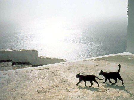 chats_dans_le_soleil