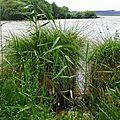 Balade au Lac 2506168
