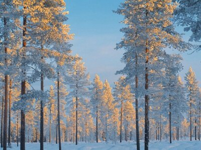 bruno-ehrs-snow-covered-forest