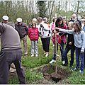 plantation de l'arbre