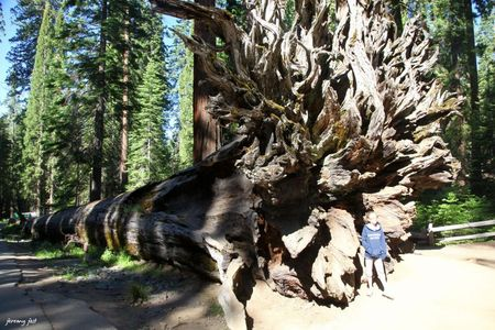 sequoia a terre