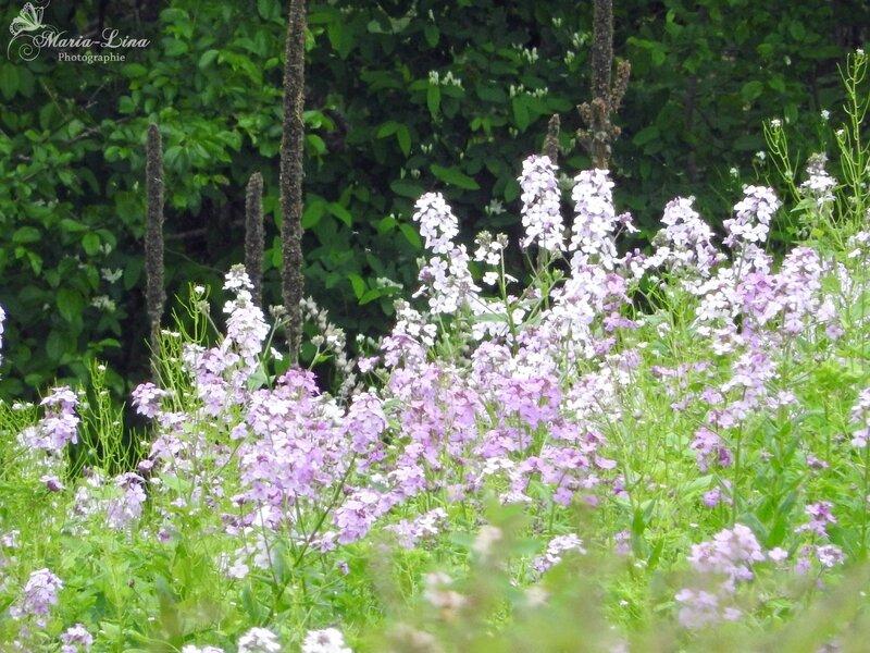 fleurscertaine