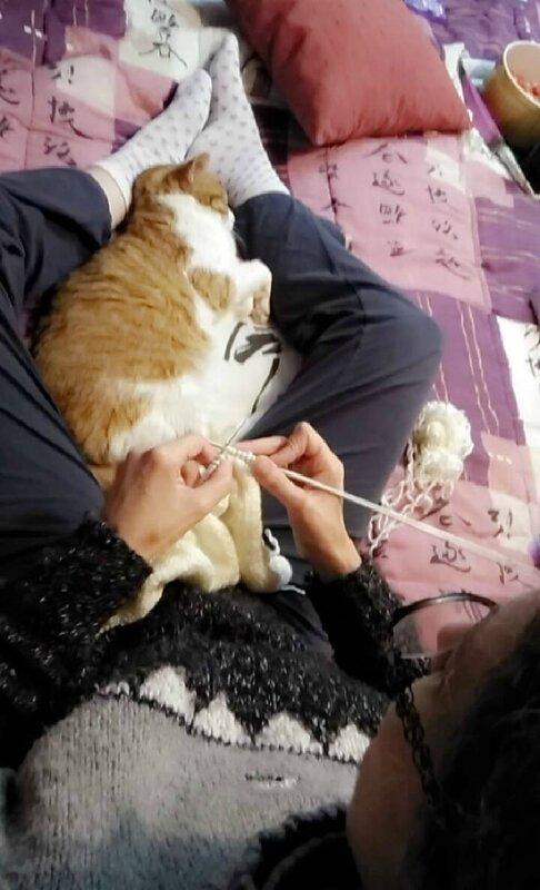 Loukoum et Cat