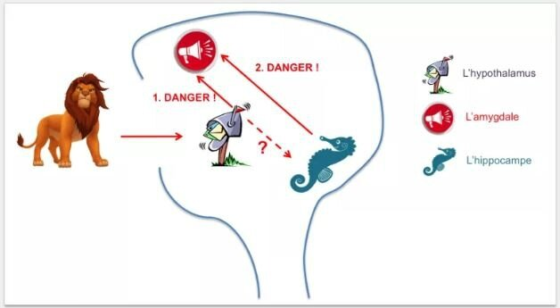 cerveau_enfant_stresse