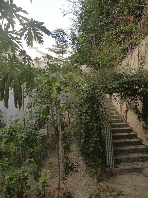 Jardin d'une ancienne synagogue