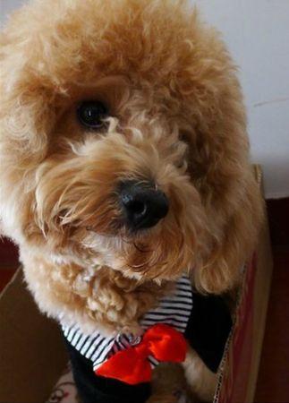 costume chien 2