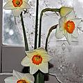 Narcisses (2) (Copier)