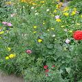 2008 08 19 Mon mélange de fleurs d'été