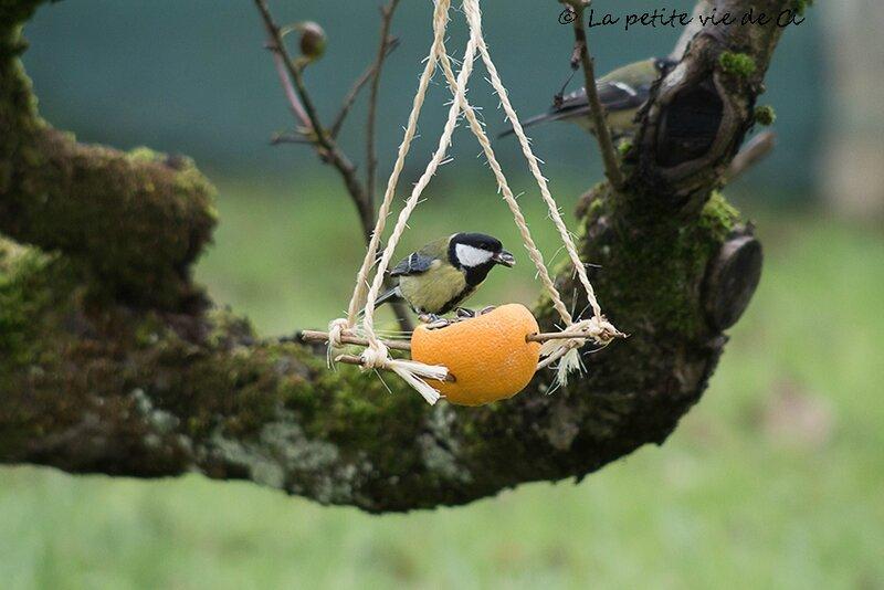 lapetiteviedeci_mangeoire_oiseaux (9)