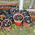 Potager en permaculture : nouvelles plantations et encore des boutures
