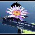 2008-07-20 - WE 16 - Longwood Gardens 032
