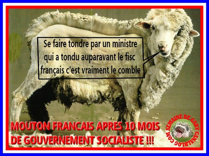 les differences entre le mouton francais et le mouton