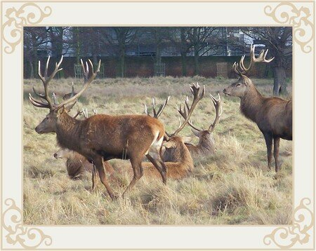 PARK_AND_STAGS