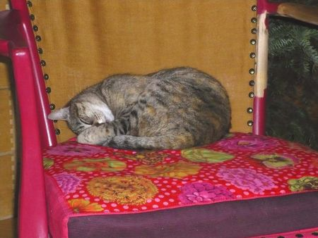 fauteuil__chat