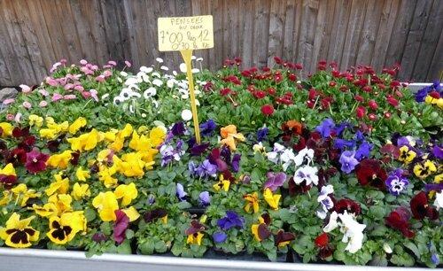 haraux-vente-fleurs-nancybu