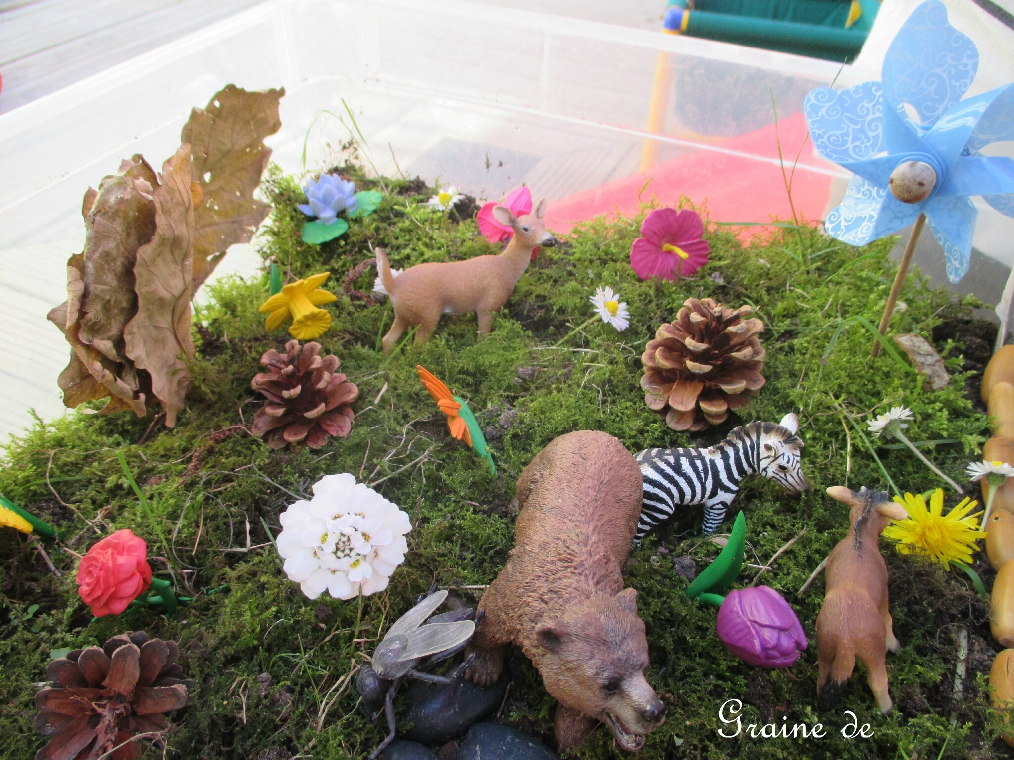 Un mini jardin / Small world / Little garden
