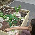 Jardins et insectes