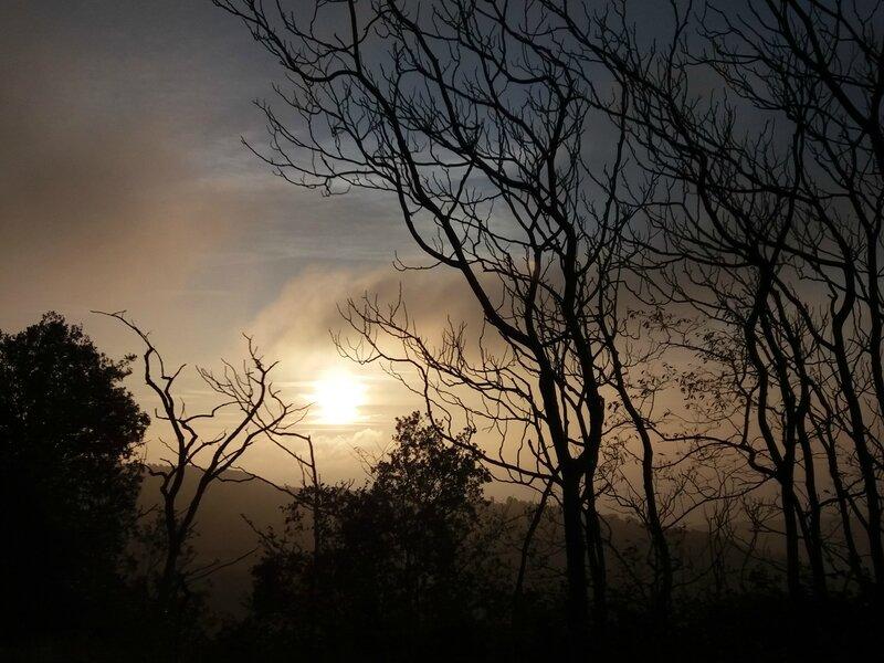 Brouillard givrant (1)