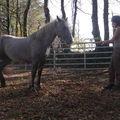 jeunes chevaux et travail
