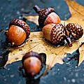 Savourer l'automne ... (2)