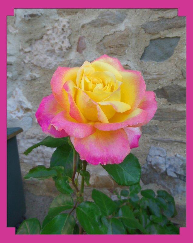 Une rose est une rose est une rose...