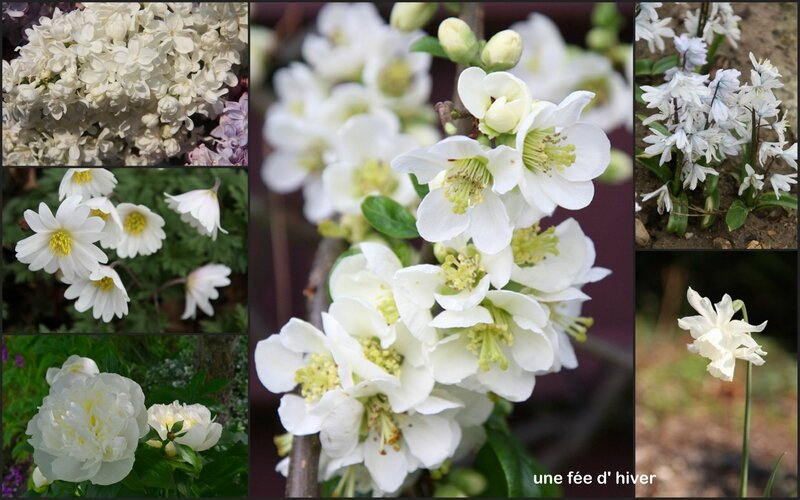 Fleurs Blanches Hiver Vap Vap