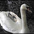 Image du jour - l'instinct maternel est divinement animal...