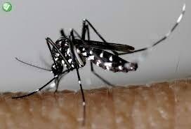 image moustique