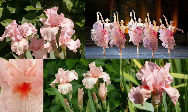 Danse et fleurs (5)